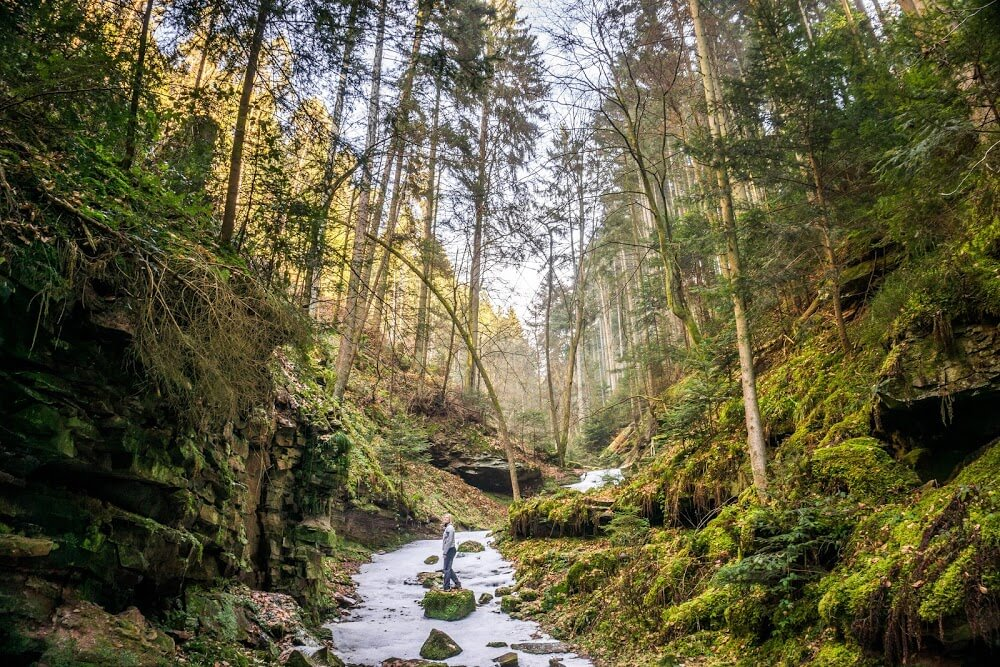 Walking in the Black Forest, Germany